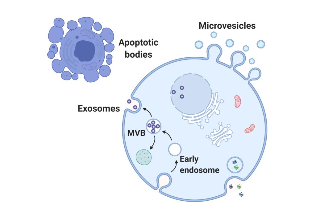 Extracellular vesicle (EV) analysis