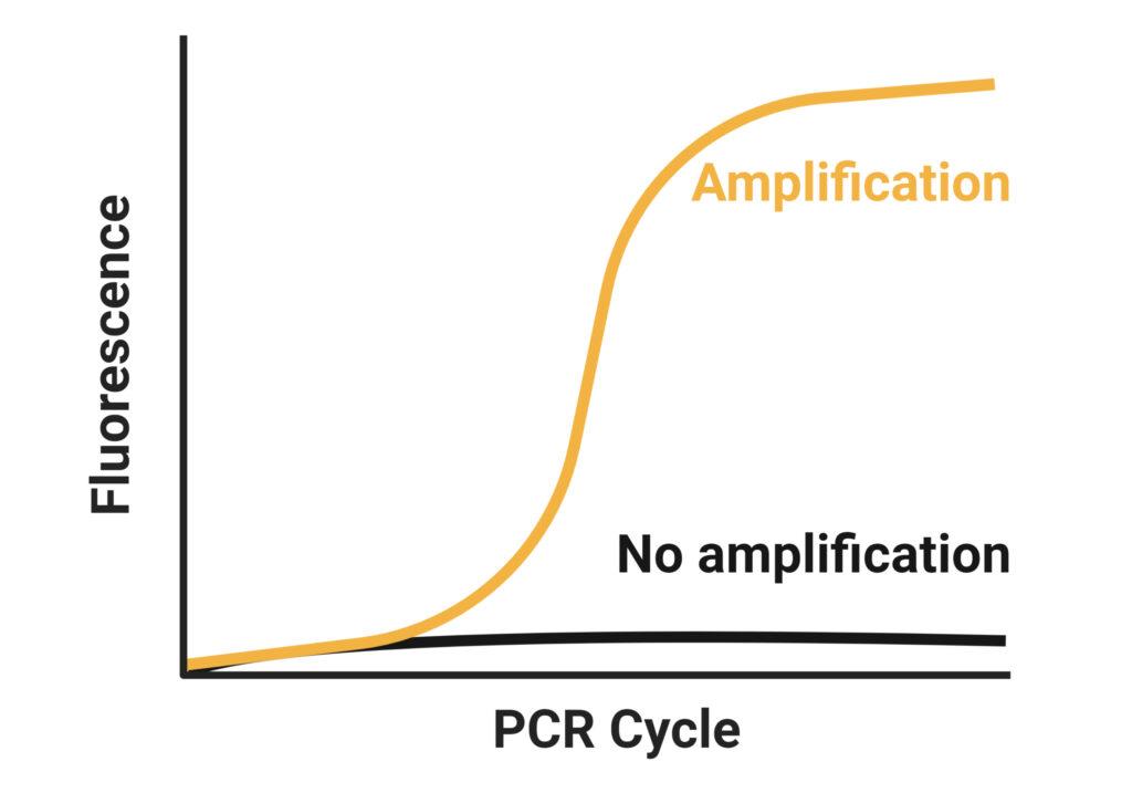 RT-qPCR services