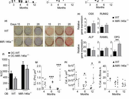 microRNA-146a controls age-related bone loss